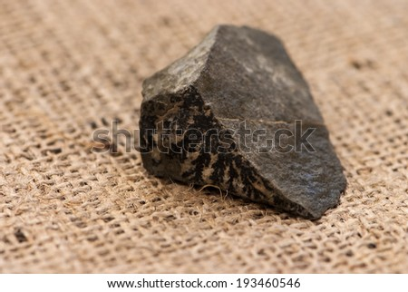fossilized imprint of plants on the stone - stock photo
