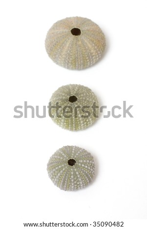 Fossilized sea urchins isolated on white