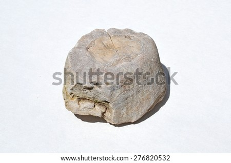 Fossils of sea snails - stock photo