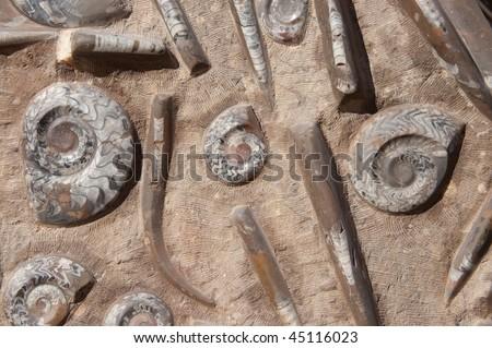 fossils on stone background - stock photo