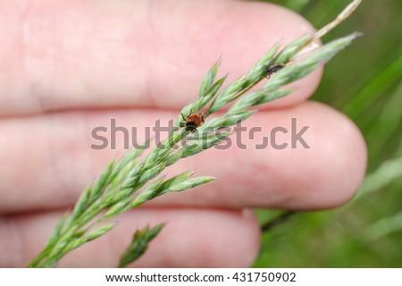 found some ticks - stock photo