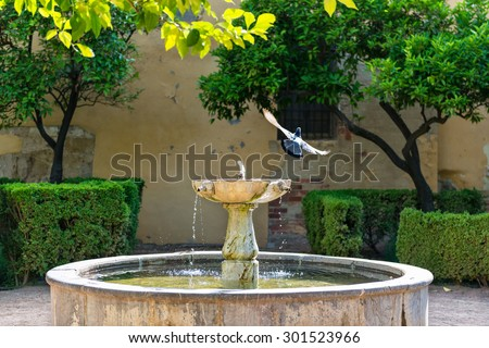 Fountain in the middle of a typical patio in Cordoba, with a pigeon taking flight after bathing on its waters.