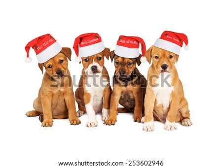 Four adorable eight week old mixed Shepherd breed puppy dogs wearing Christmas Santa Hats - stock photo