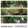 Four assorted views of rain forest - stock photo