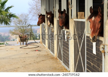 Four brown horses stand in a stable - stock photo