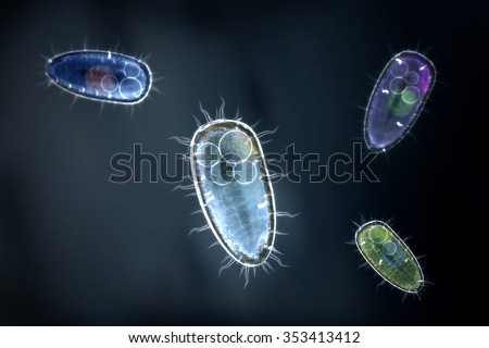 Four colorful protozoons / unicellular organism - stock photo