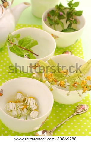 four cups to prepare various herb`s tea-chamomile,linden,mint and nettle - stock photo