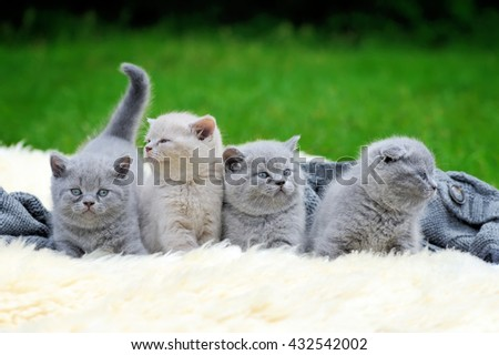 Four cute gray kitten on fur white blanket on nature - stock photo