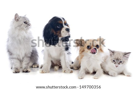 four dogs and cat in front of white background