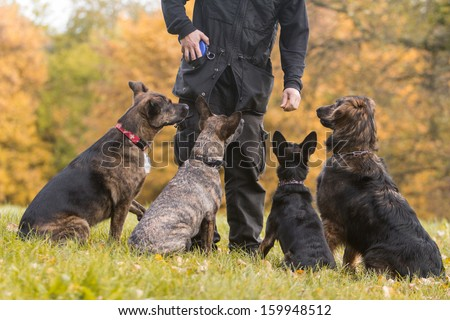 four dogs in training - stock photo