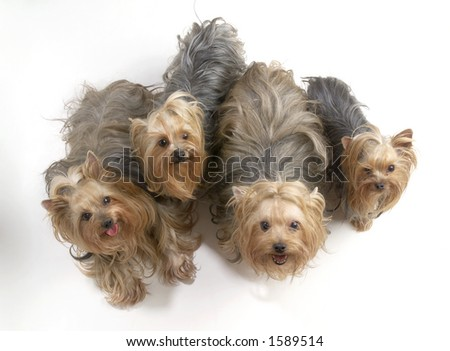 Four dogs looking up. - stock photo