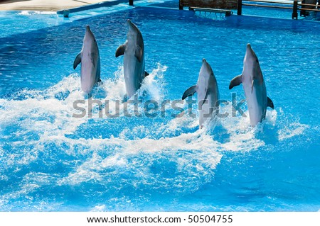 Four dolfins performing in a pool in Palma Majorca - stock photo