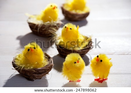 Four Easter Baskets Or Nests With Yellow Feathers And Many Easter Chicks Sunny Light With Copy Space Free Text Your Text Here For Happy Easter Greetings Easter Decoration Close Up  Wooden Background - stock photo