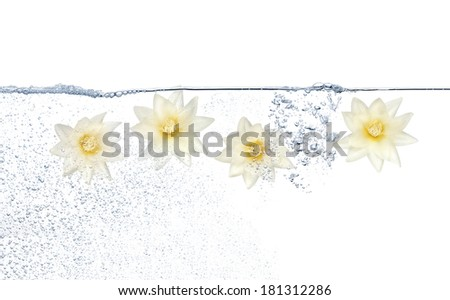 Four flowers under water against white background - stock photo