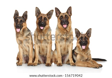 Four funny shepherd on a white background