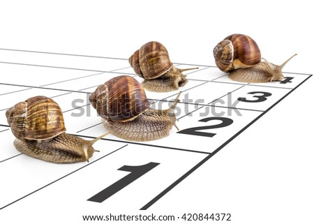 Four garden snails (Helix aspersa) race ona the running track on white background. Teamwork concept, competition. - stock photo