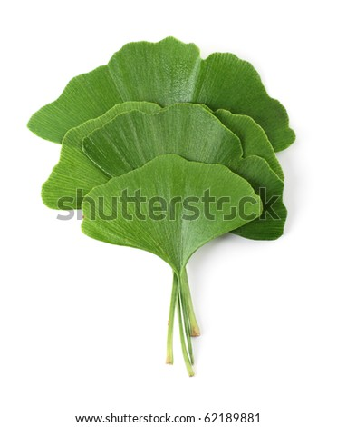 Four ginkgo biloba leaves on white background