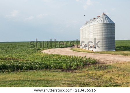 four granary bins sitting next to a curved gravel road and a green planted field under a bright blue sky in the summer time - stock photo