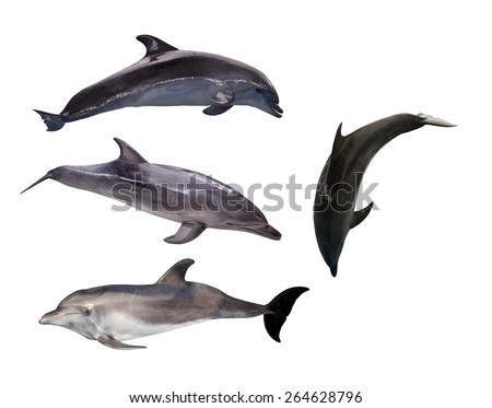 four grey dolphins isolated on white background - stock photo