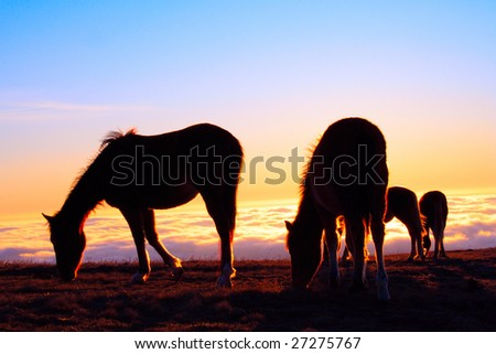 four horses on a pasture on a cloudy mountains background - stock photo