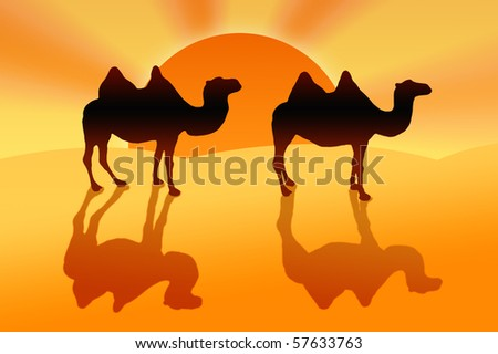 Four humps, two camels