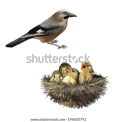 Four hungry baby sparrows in a nest wanting the mother bird to come and feed them, Bird nest with young birds - stock photo