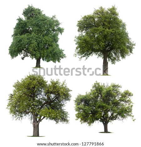 Four isolated trees against a white background - stock photo