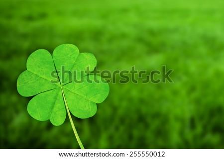 four leaf clover against grass - stock photo