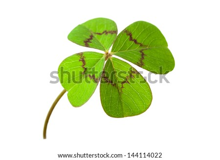 Four leaf clover for luck, isolated on white background - stock photo