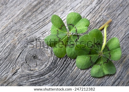 Four leaf clover on grey wooden background - stock photo