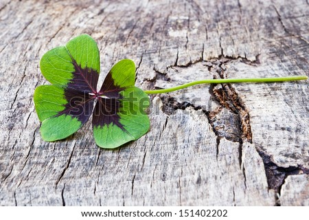 four leaf clover on wood - stock photo