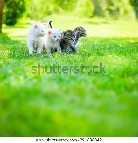Four little kitten walking on the green grass - stock photo