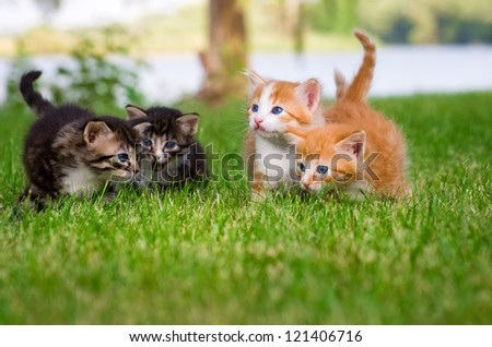 Four little kittens playing in garden together - stock photo