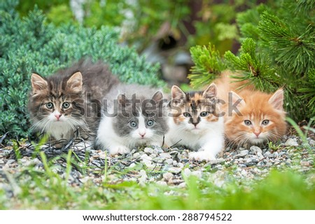 Four little kittens sitting in the garden