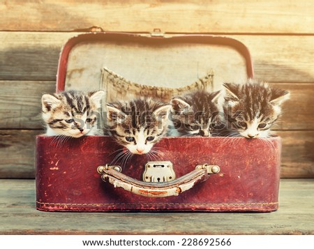 Four little kittens sitting in vintage suitcase on wooden background. Image with sunlight effect - stock photo