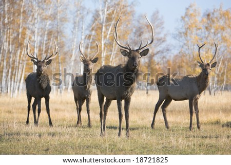Four male deers - stock photo