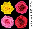 Four Perfect Rose Flower Isolated on Black Background - stock photo