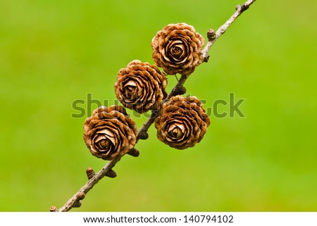 Four pinecones on a green blurred background. Gorbea, Bizkaia, Spain - stock photo