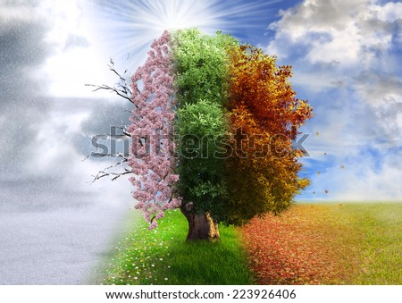 Four season tree, photo manipulation, magical, nature - stock photo