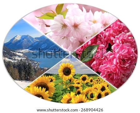 four seasons circle XI - cherry bloom, mountain landscape, sunflowers, roses - stock photo
