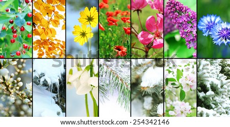 Four seasons collage: winter, spring, summer, autumn - stock photo