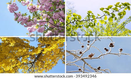 Four seasons collage with spring summer autumn winter tree - stock photo