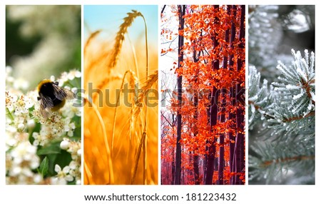 Four seasons: Spring, summer, autumn and winter - stock photo