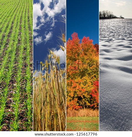 Four seasons: Spring, summer, autumn and winter. Vertical banners. - stock photo