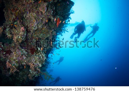 Four silhouettes of Scuba Divers swimming next to vertical live coral reef full of fish. National Park of Egypt.