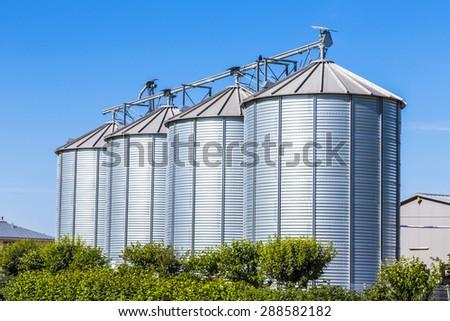 four silver silos in field under bright blue sky - stock photo