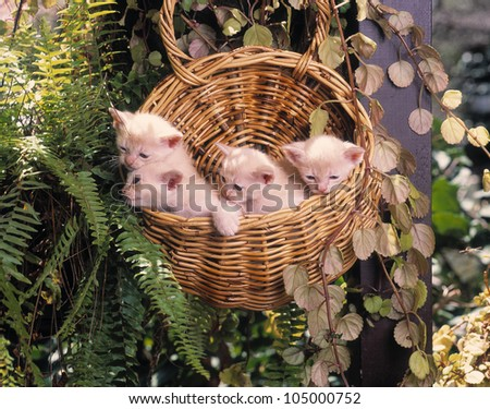 Four small kittens playing - stock photo
