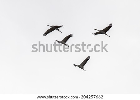 four storks  in the sky - stock photo