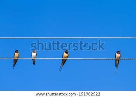 Four swallows sitting on a wire against blue sky background - stock photo