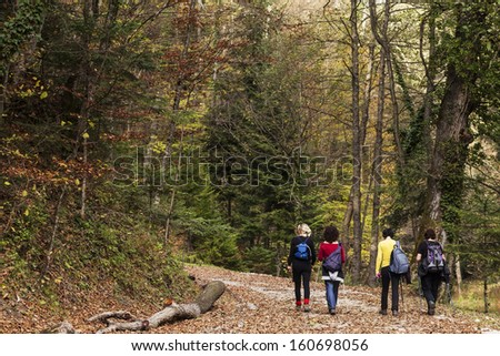 Four women taking a walk in the woods - stock photo